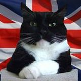 Daves Cat