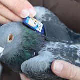 Special Bird Delivery Service