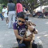 Cachorro Cachurro