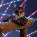 kittycaty