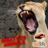 Dibattito Animale