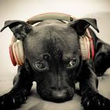Te Amo - Jandy Feliz13 (DJ Janus)