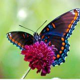 butterflyeffects