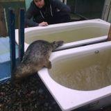Irish Seal sanctuary,Brendan Price.