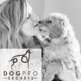 DogPro On the Go!