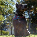 Bigboydogg