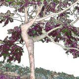 Täume die Banzen
