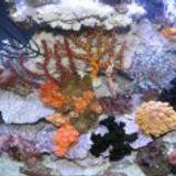 Rayjen Reefs