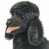 Dj Big Black Poodle