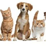 Why Pay More To Have Your Pet Spayed Or Neutered In Dr. Roger's Vet Hospital?