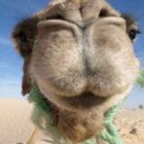 CAMEL85cz