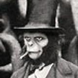 Mr. Primate