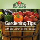 Burpee Home Gardens Tip of The