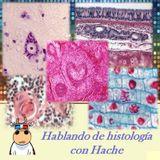 Hablando histología con Hache