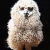 kk.owl