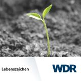 """""""No future song in me"""" - Verlust und Trauer bei Fehlgeburten"""