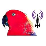 Radio Eclectus
