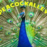 PeacockAlley