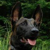 Milow Dersporthund