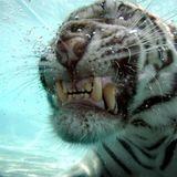 TigerTechnoPodcast#3