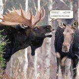 Moose Mix 1.8.17