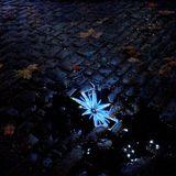 DJ GOGY - Fallen Star