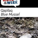 Season 19, Lesson 37, Blue Mussel