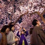 Monday night travel: four seasons in Kyoto