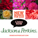 Jackson & Perkins | New Intros for 2018