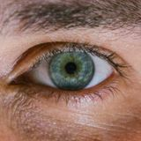 The eyes have it: understanding your sight