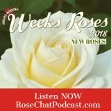 Weeks Roses | New Roses for 2018