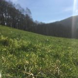 #1248: Sitting on the grass on a low energy day