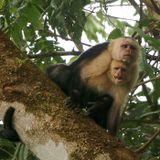 Stockholms tunnelbana och Costa Ricas regnskog - två fascinerande ekosystem