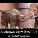 ROLLTIDE! Tearin' it up for The UA Staff, Faculty and Players)