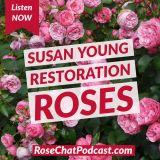 Susan Young | Restoration Roses