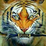 Lie Tiger