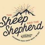 The Sheep and the Shepherd: Take the First Step