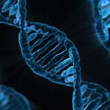 """Y chromosome DNA """"match"""" can mislead jurors: statistician"""