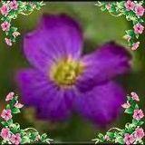 Violeth Violeth
