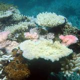 Climate Council says GBR bleaching will cost $1 billion in annual tourism revenue, thousands of jobs