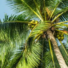 Exotica #3 - On a Coconut Island