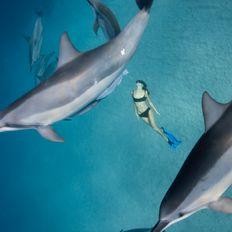 "Leina Sato ""Les dauphins amoureux"""