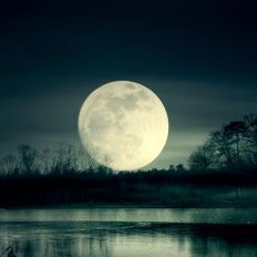 THE NATURE OF MOONLIGHT 316: Ambient + Chill