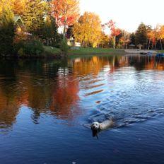 247) Chansons pour octobre - Musique de Montréal