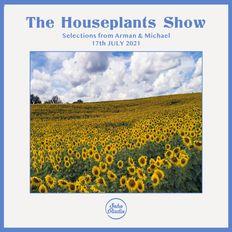 Houseplants (17/07/2021)