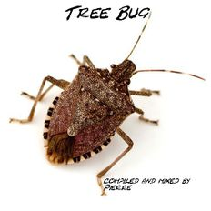 Tree Bug compiled with love by Pierre