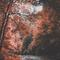 Autumn Reverie II   ST 2018.11.10