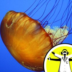 QnA - Should you wee on a jellyfish sting?