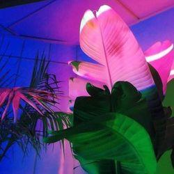 Nuits Des Tropiques 2