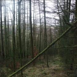 Trees = Good